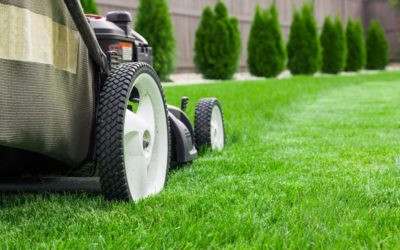 The Ultimate Guide to Greener Grass