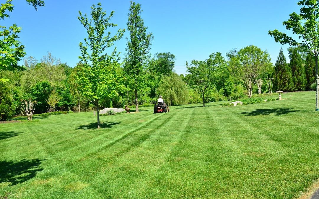 5 Tips for a Healthy and Beautiful Yard