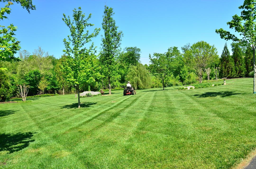 A Beautifully Mowed Lawn