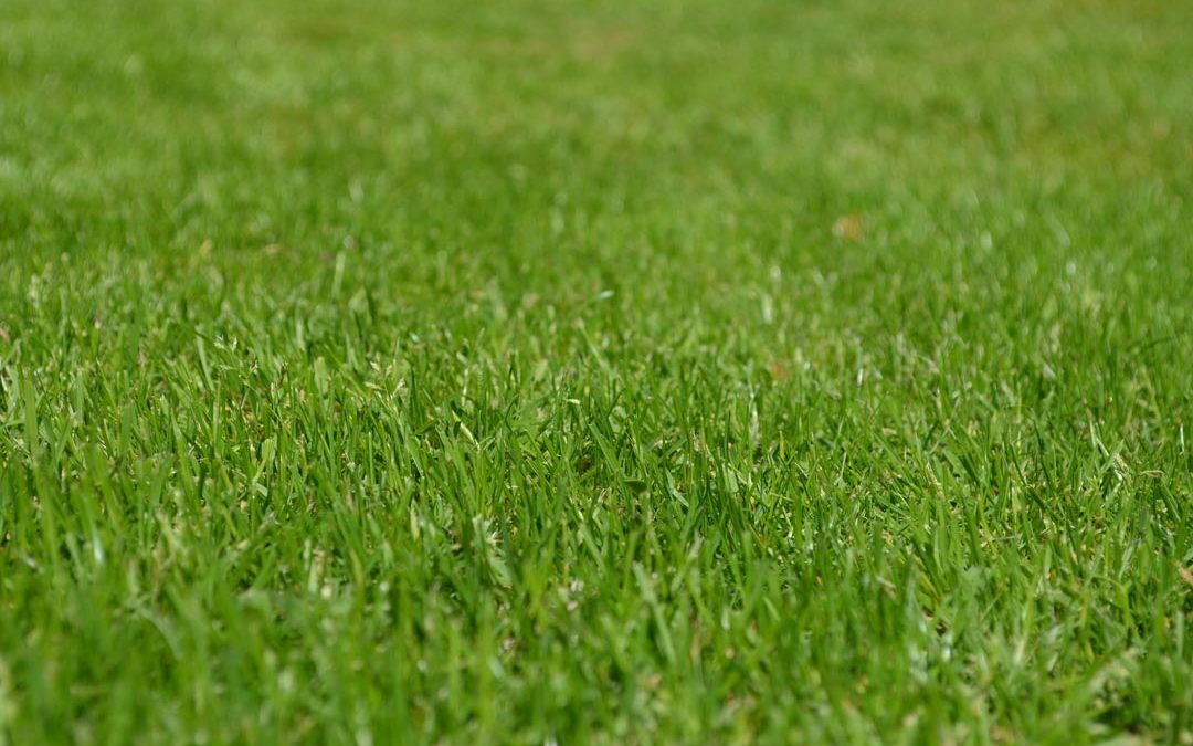 New Lawn Seeding for Local Park